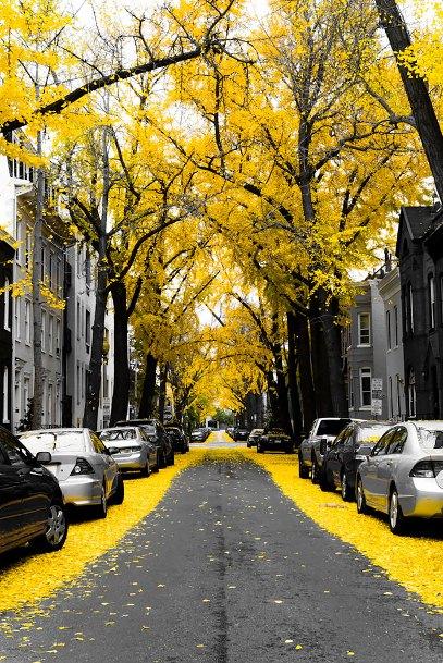 beautiful-streets-trellis-canopies-12__700