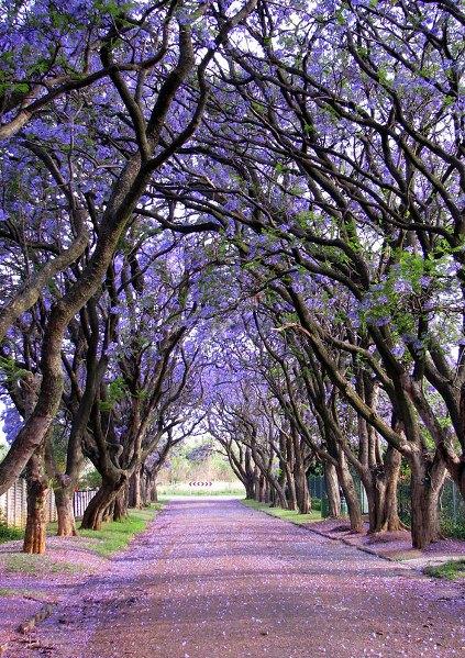 beautiful-streets-trellis-canopies-13__700