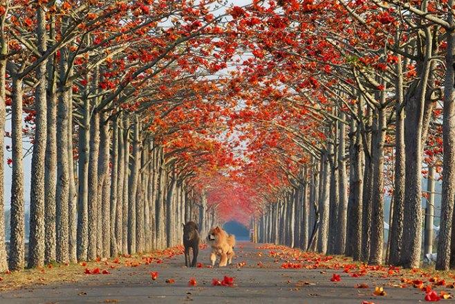 beautiful-streets-trellis-canopies-15__700